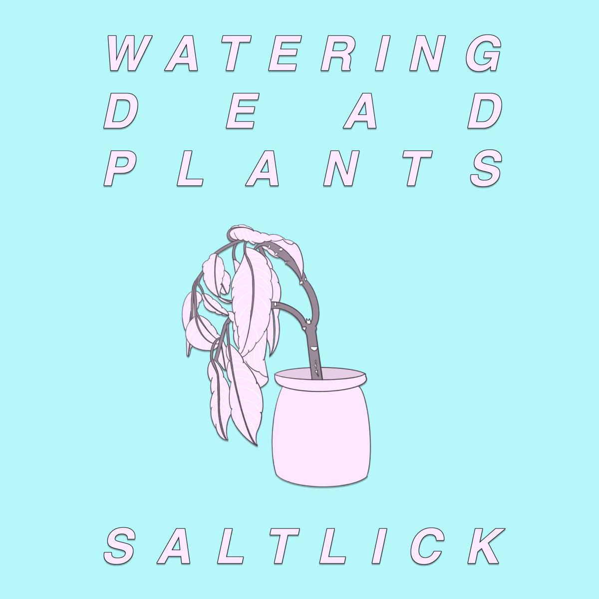 Saltlick – Day 16
