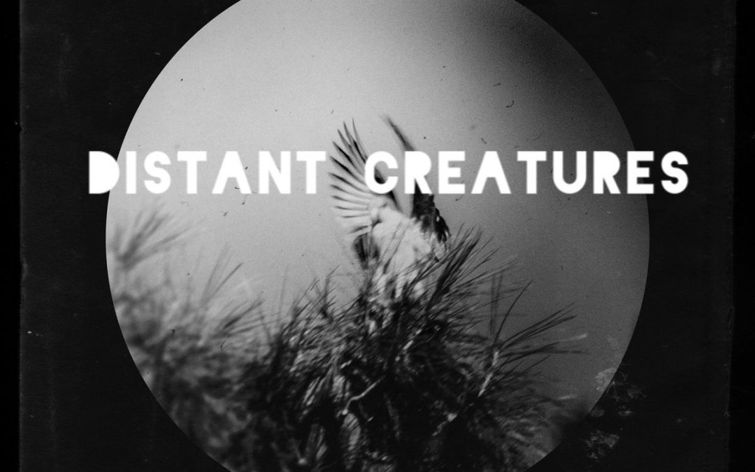 Distant Creatures – Not Even Love